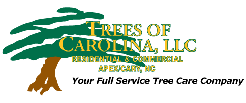 Trees of Carolina