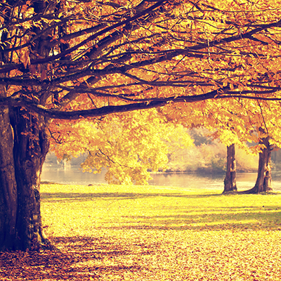 fall season tree care