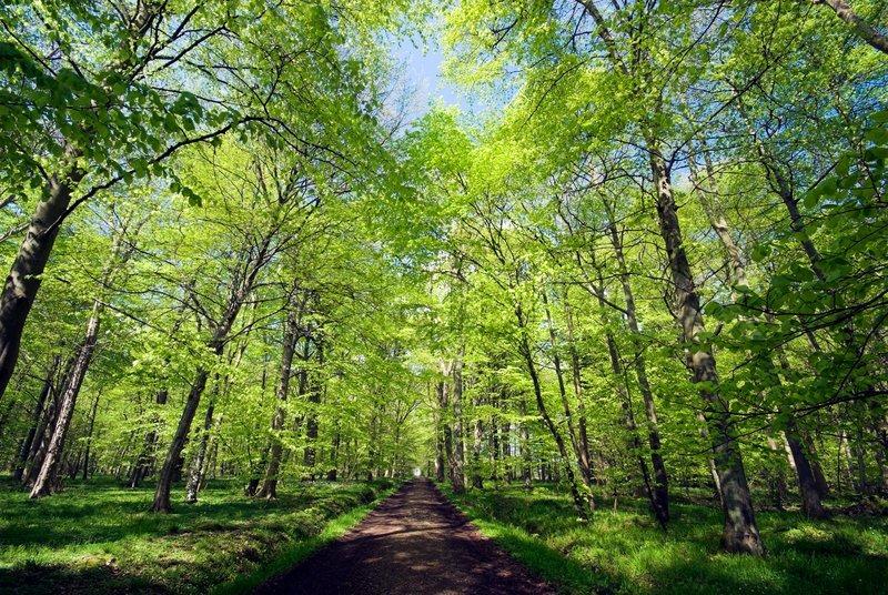tree tips for trees of carolina
